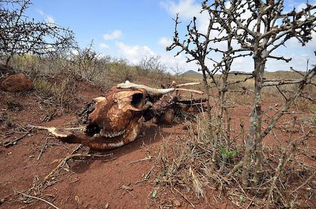 A livestock carcass in Northern Kenya after a prolonged drought. Niel Palmer/CIAT/Some rights reserved.
